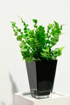 Bedste luftrensende planter